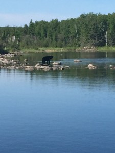 Black Bear at Black Bear Lake